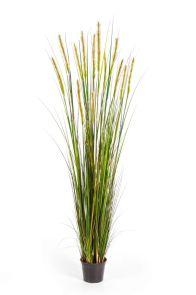 Gras Foxtail Groene Pluim, H: 180cm
