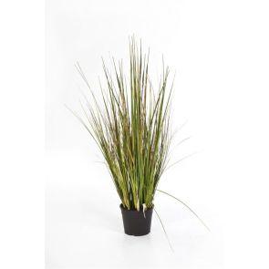 Gras bamboo, H: 90cm