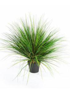 Gras Onion, H: 65cm