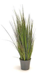 Gras Rivergras, H: 60cm