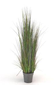 Gras Rivergras, H: 90cm