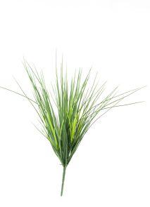 Mountain gras Groen, H: 47cm