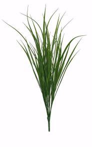 Mountain gras, H: 70cm