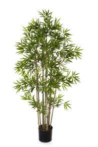 Bamboe Japanese, H: 140cm