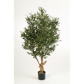 Olijfboom met olijven, H: 120cm
