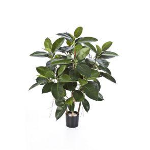 Ficus Elastica, (rubber plant), H: 90cm