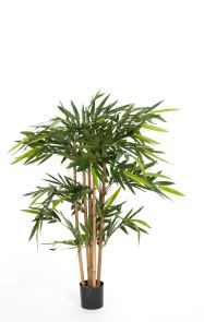 Bamboe de Luxe, H: 120cm