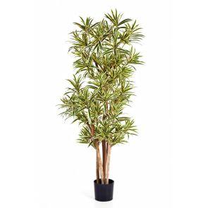 Dracaena Reflexa Geel-Groen, H: 120cm