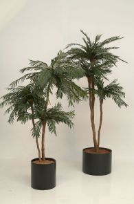Cycas Palm 3 stammen, H: 160cm