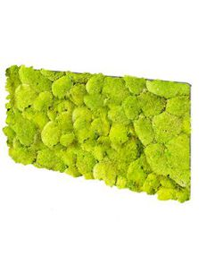 BioMontage, Acoustic Moss Panel 100% Pillowmoss, L: 28cm, H: 5cm, B: 58,5cm