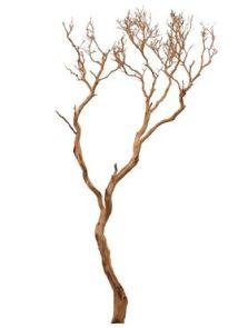 manzanita hout