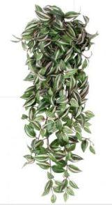 Tradescantia Groen, L: 80cm