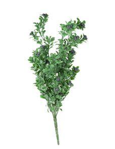 Berry Pearl Leaf Bush, 48 cm