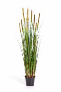 Gras Foxtail Groene Pluim, H: 90cm
