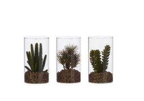 Vetplant Groen, H:18cm, Diam:10cm (Keuze uit 3 soorten)