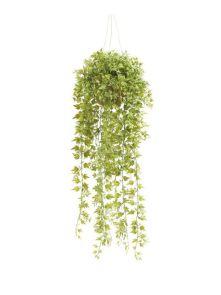 Ivy Hanging Bush, 50cm