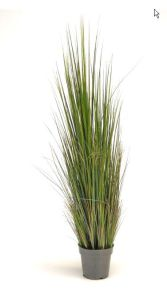 Gras Rivergras Groen, H: 120cm