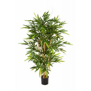 Bamboe de Luxe, H: 240cm