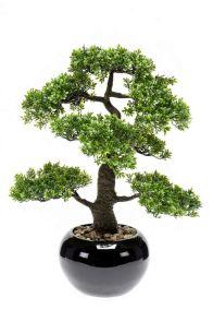 Bonsai Cedar in zwarte pot Groen, H: 47cm
