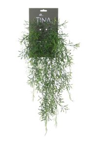 Asparagus Sprengeri met bloem, H: 56cm