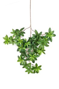 Azalea Leaf, L: 62cm