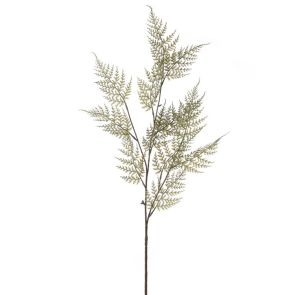 Varen fijn, H: 70 cm