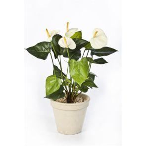 Anthurium wit/creme, H: 44cm