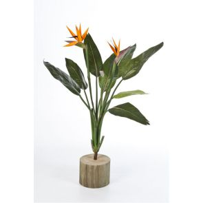 Strelitzia Bush Steker, 100 cm