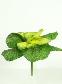 Kooltje groen
