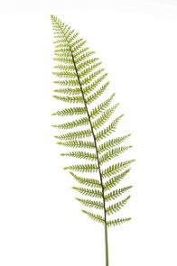 Varen Groen steker, H: 100 cm