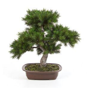 Pine Bonzai (Kunst), H: 48cm
