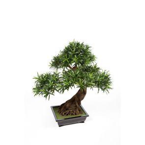 Podocarpus Bonzai (Kunst), H: 80cm