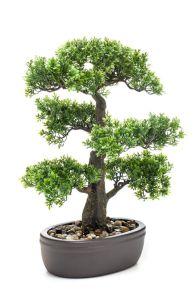 Ficus mini bonsai in pot, H: 43cm
