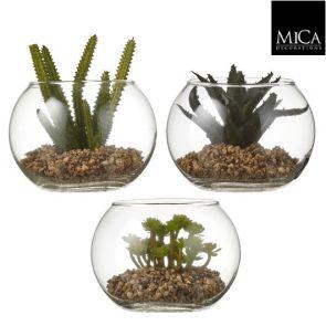 Vetplant Groen, H:11cm, Diam:15cm (Keuze uit 3 soorten)