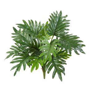 Philodendron Selloum steker, H: 50cm