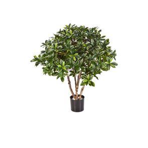 Euonymus Japonicus bush, H: 75cm