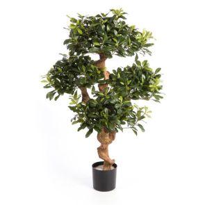 Pittisporum Mountain tree, H: 120cm