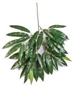 Mango blad, H: 55cm