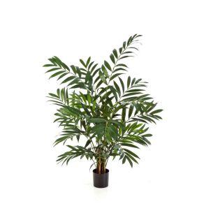 Parlour Palm, H: 110cm