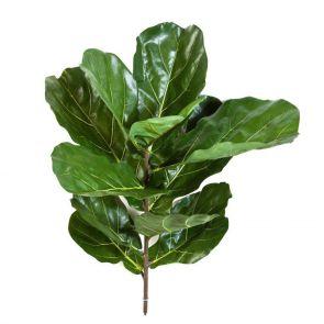 Fiddle Leaf, L: 77cm