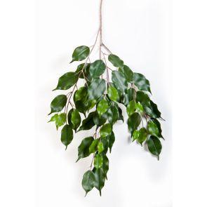 Ficus Exotica - Vlamvertragend behandeld