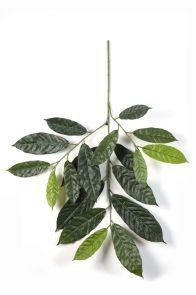 Cacao blad, H: 83 cm