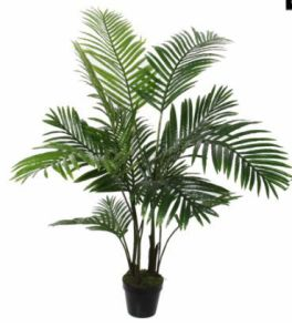 Areca Palm in pot, H: 120 cm