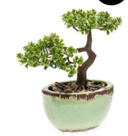 Pilea Bonsai in groene pot, H: 23 cm