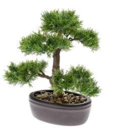 Cedar Bonsai in pot, H: 32 cm