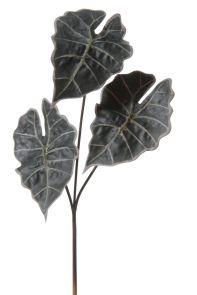 Alocasia x3 Paars / Groen, H: 72cm