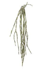 Cactus hanger groen, L: 80cm
