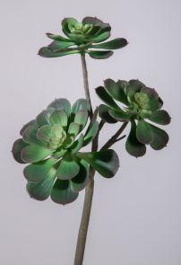 Succulent, H: 46cm