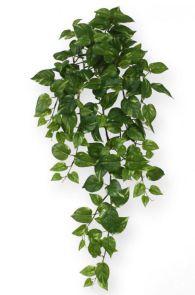 Scindapsus Groen, H: 75cm