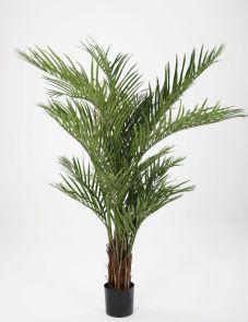 Areca Palm, H: 170 cm
